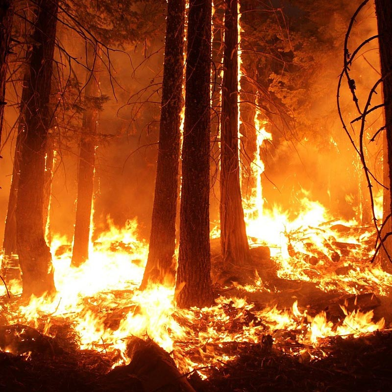wildfire insurance inspection